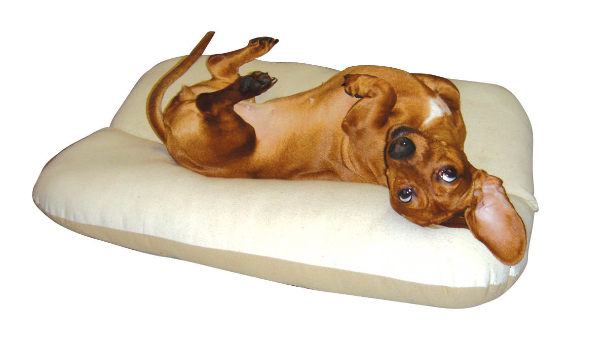 The BunBed for Dachshunds